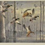 The-Snowstorm-Mallards-by-Maynard-Reece-1967-Signed-Print-745950-264627559457