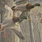 The-Snowstorm-Mallards-by-Maynard-Reece-1967-Signed-Print-745950-264627559457-5