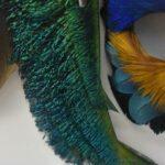 Gwen-Bennett-Framed-Feather-Art-Mask-264795110839-4